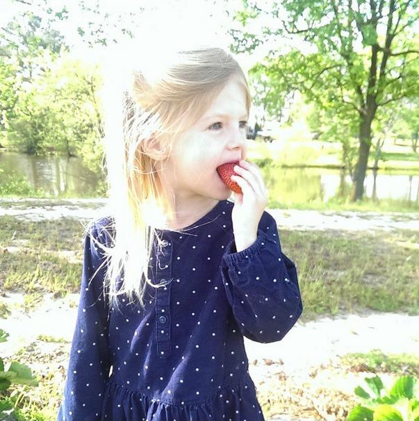 aubs strawberry