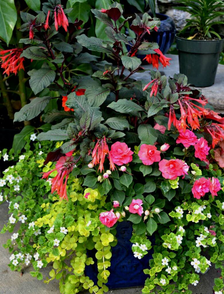 Even The Smallest, Most Simple Container Gardens Can Add Interest To A Dull  Garden Spot!