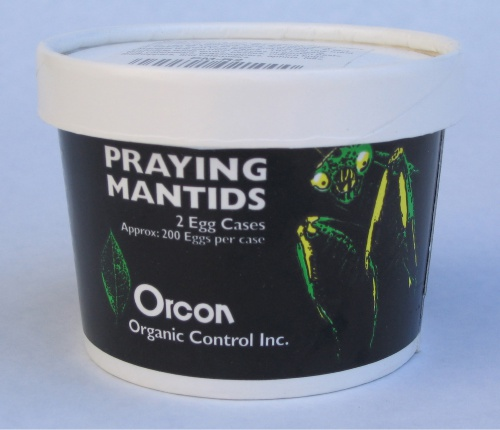 orcon praying mantids