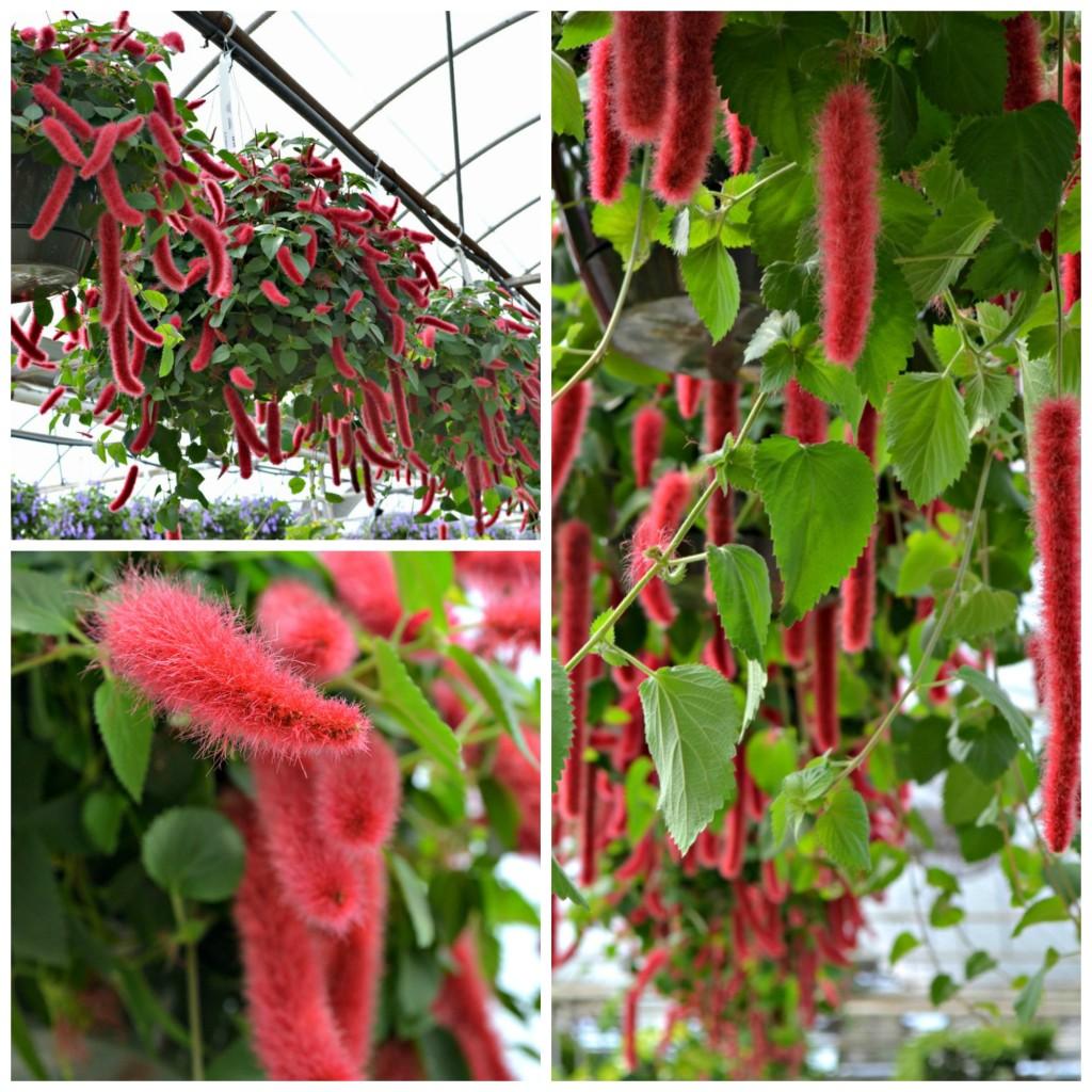 Chenille plant web