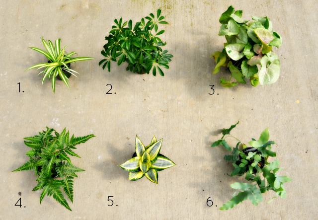 tropical plants numbered