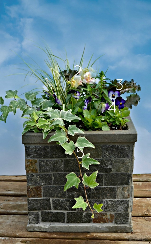 Fall Container Garden with Kale, Acorus and Ivy