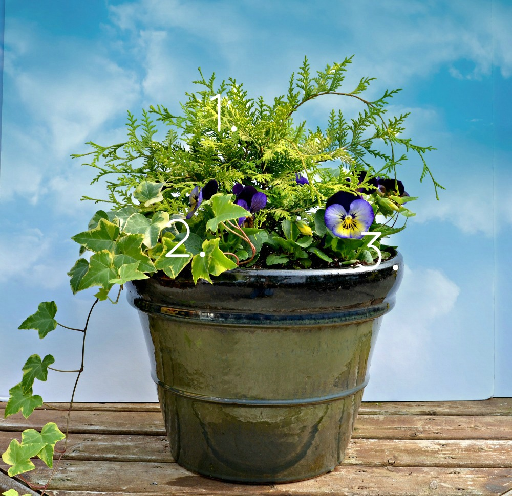 Fall Container Garden with Vintage Gold Cypress