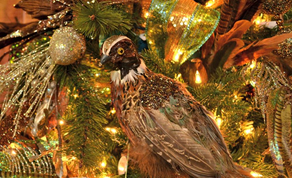 grandeur pheasant