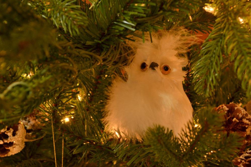 owl be home white owl