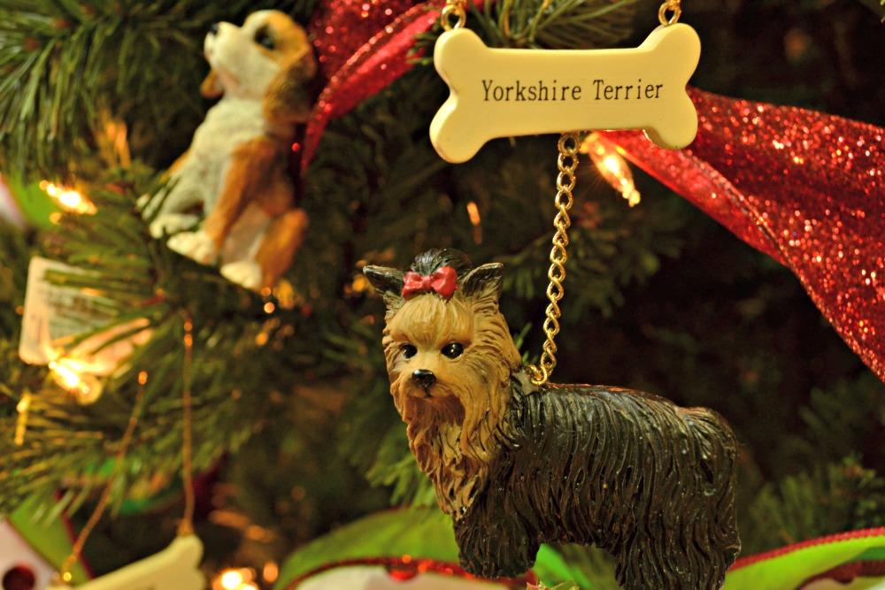 pet shop yorkie