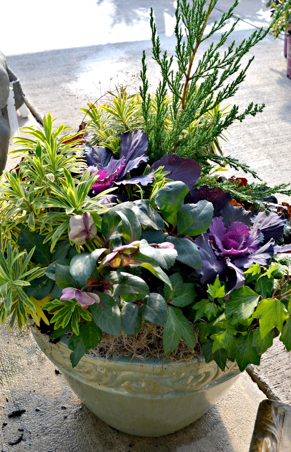 hellebore container full