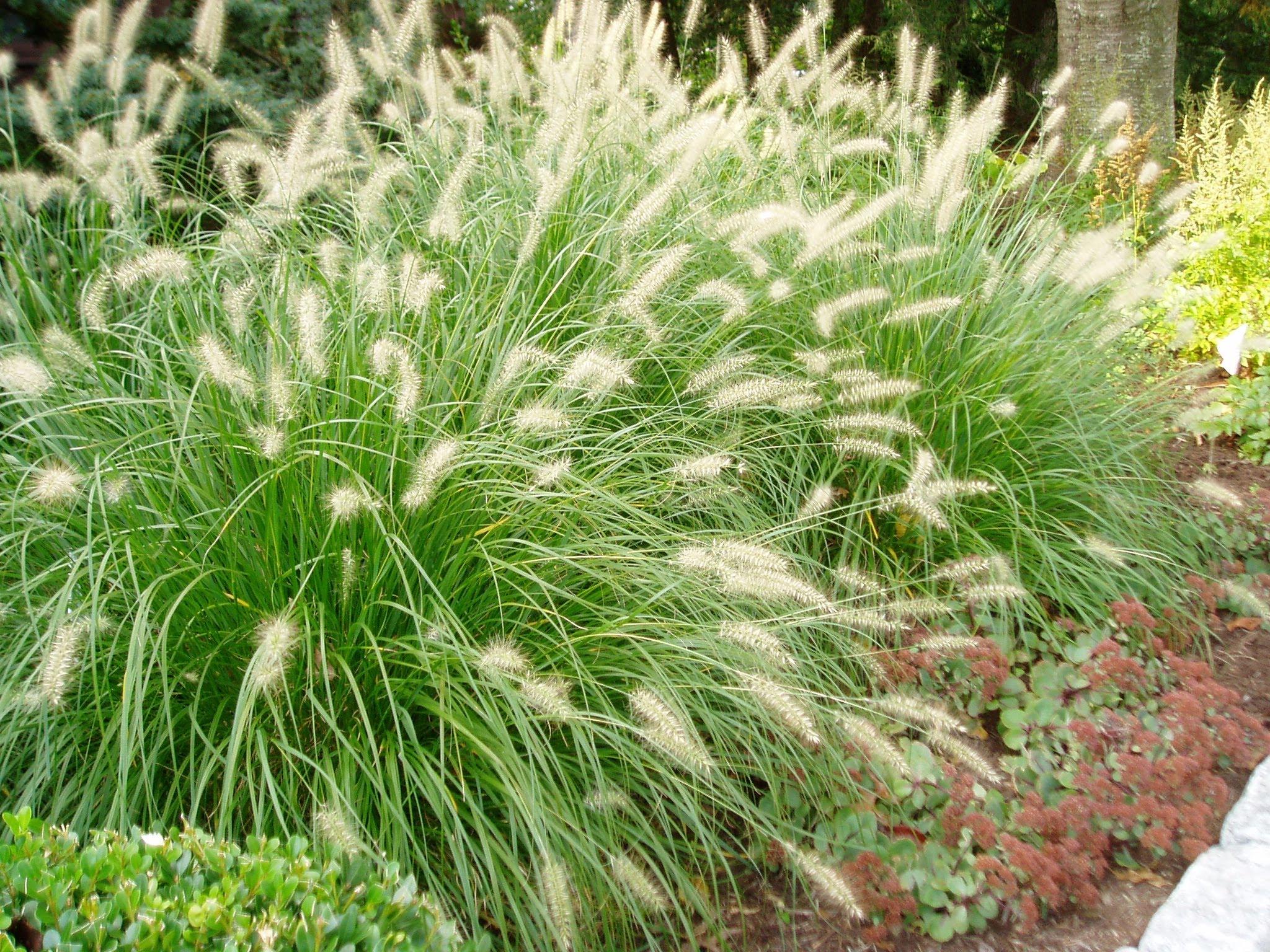 Ornamental Grass Garden Plan Perennials raleigh nc ground cover ornamental grasses workwithnaturefo