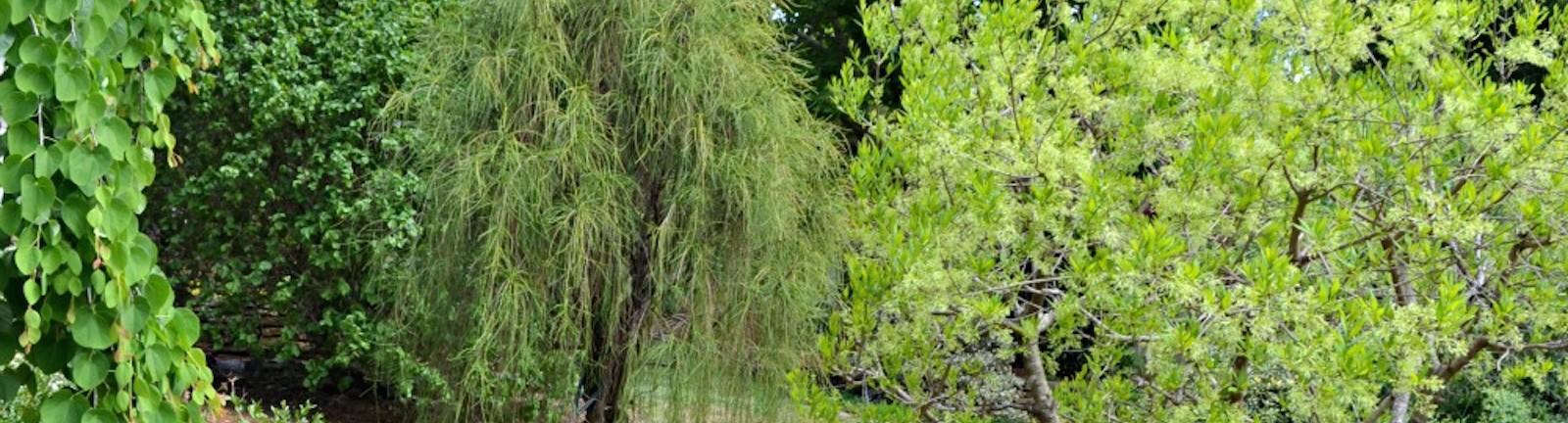 Tree Amp Shrubs Nursery Raleigh Nc Fairview Garden Center