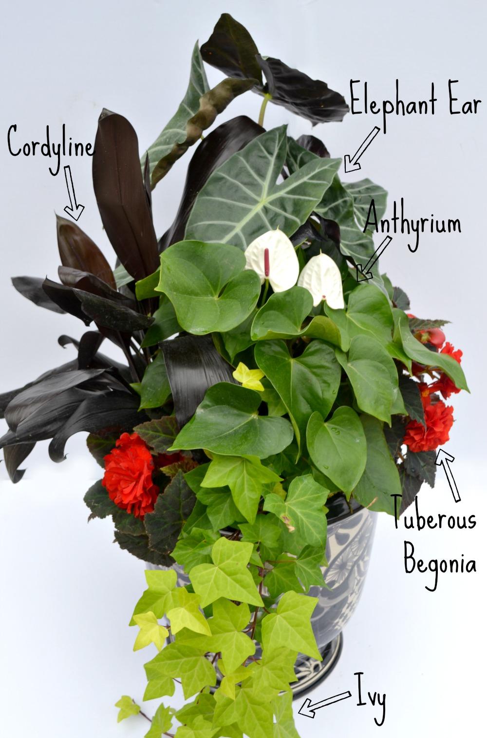 How To Create A Container Garden Fairview Garden Center