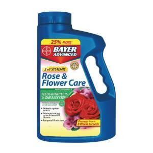 bayer rose