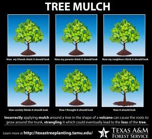 tree mulch