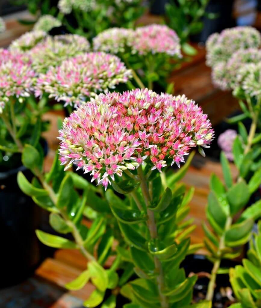 How To Plant A Cut Flower Garden Fairview Garden Center