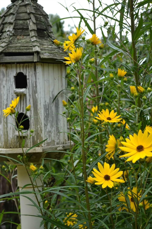 Top 10 Fall Perennial Plants Fairview Garden Center