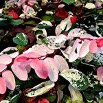 fairview plants
