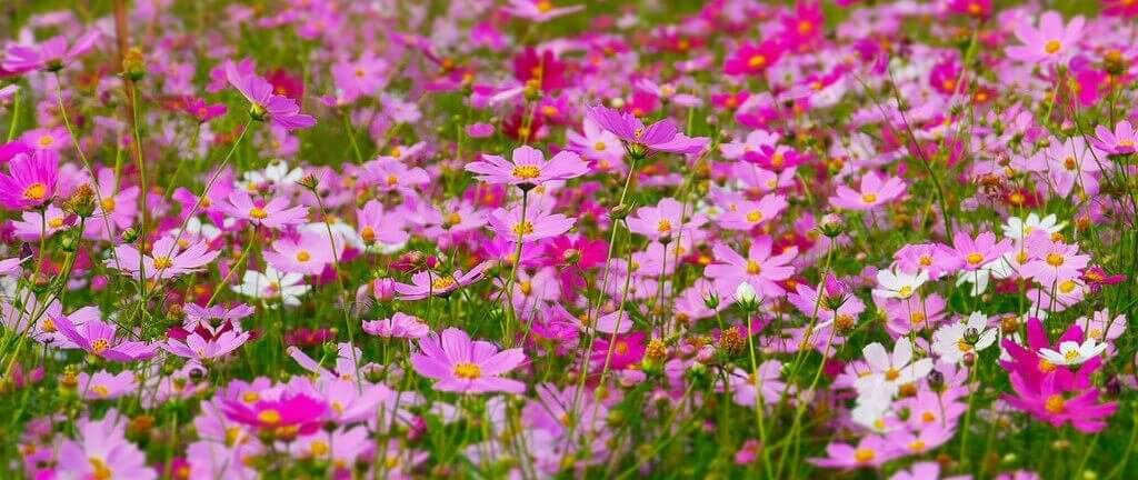pink flowers in a meadow