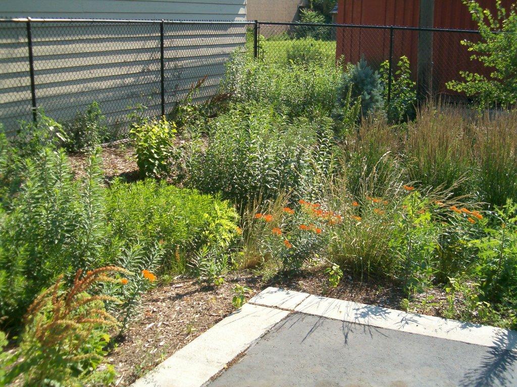 plants in rain garden