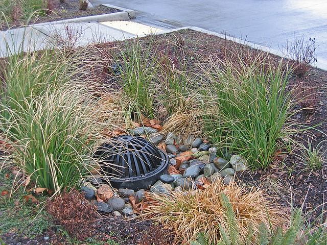 water drain in rain garden